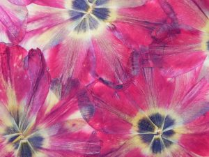 Ro 8 tulipe a