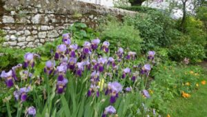 iris de chery