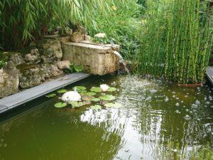 nénuphar dans l'eau