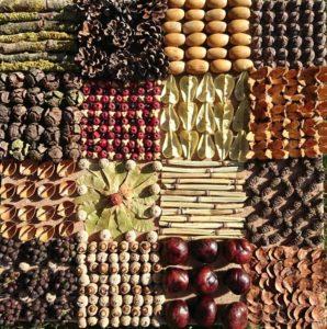 assemblage de graines et de fruits