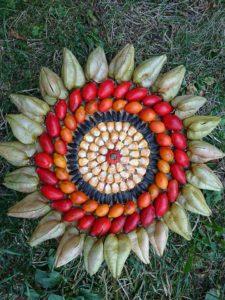 physalis, cynorhodons, graines de tournesol, maïs