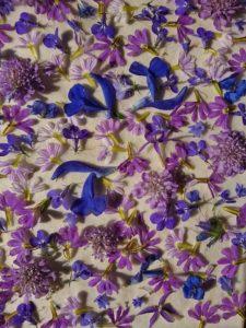 fleurs d'eté